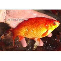 15-20cm : mix poisson...