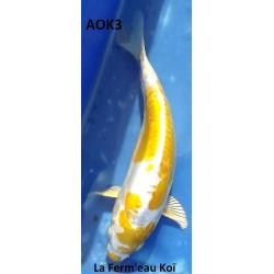 Doitsu Hariwake 20-25cm AOKI