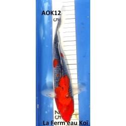 Goshiki 20-25cm AOKI