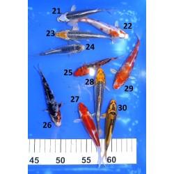 10-18cm Sélection n°21-30