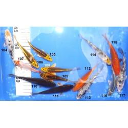 10-18cm Sélection n°104-117